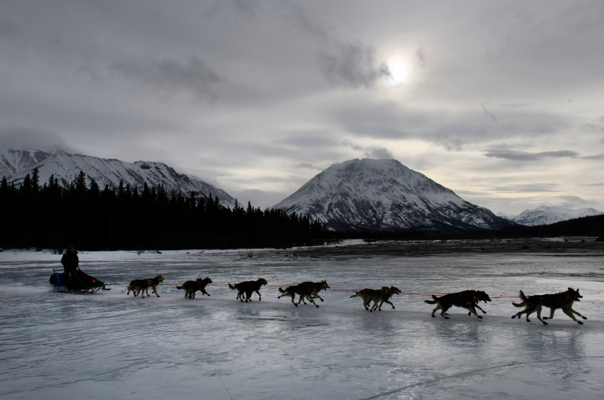 Iditarod 2019, Iditarod Trail Sled Dog Race, Rohn